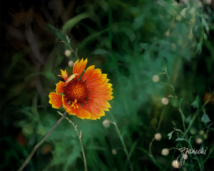 "Gaillardia (2010) | ""Garden"", botanical digital art series by Janos Janecki."